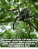 spiders.png